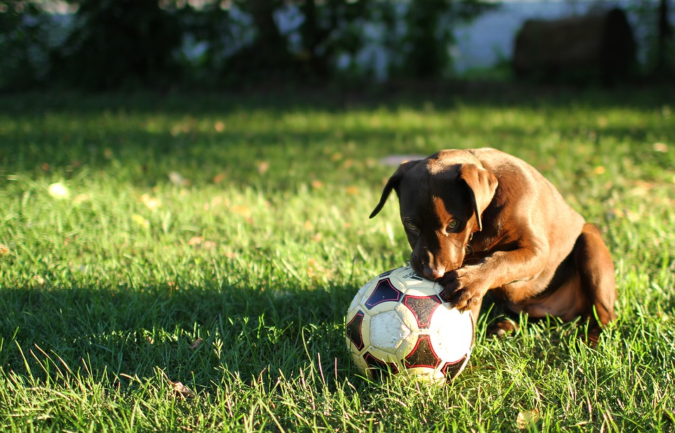 puppy and football